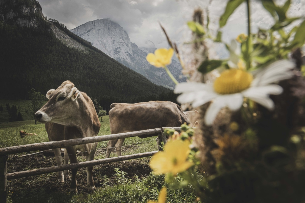 Gesaeuse, Gesäuse, Nationalpark, Steiermark, Styria