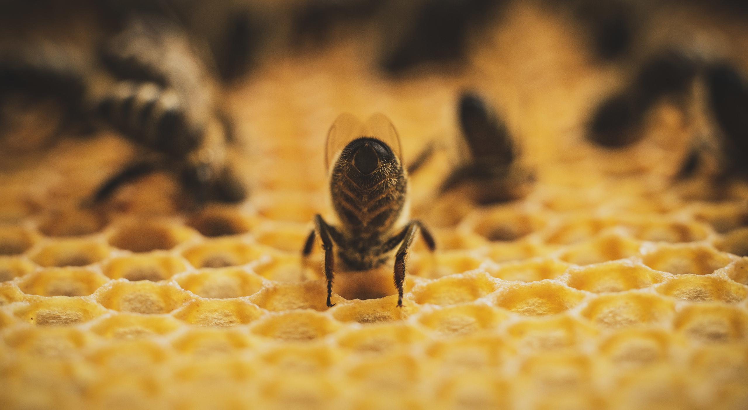 Bienen, Bees, Imker, beekeeper, rettet die bienen, save the bees, bienenfreundlich, Honigernte, Honig schleudern, Honigbiene, honeybee, honey, honig, homemade, local honey